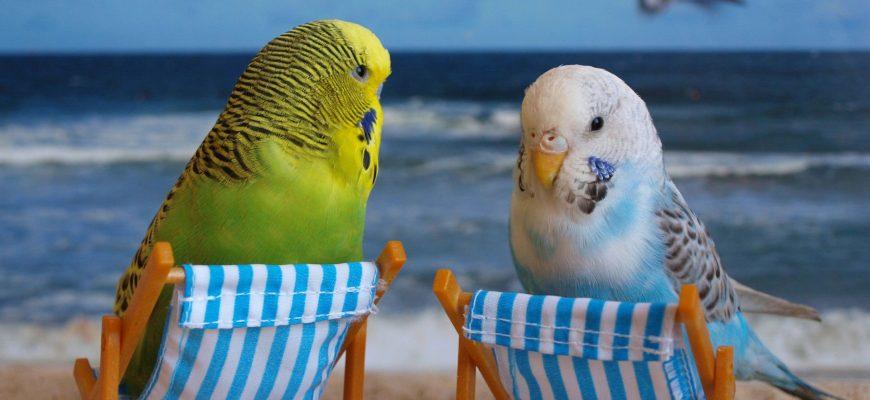 Попугайчики на летнем отдыхе
