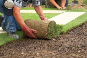 Работы по озеленению территории
