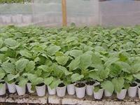 Выращивание рассады на даче