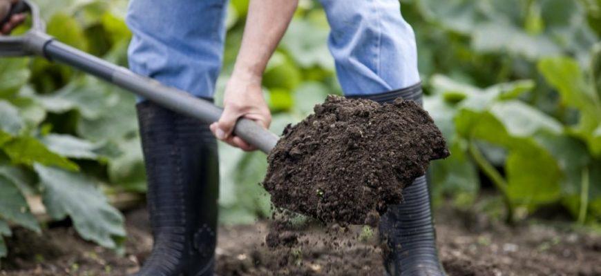 Удобрения почвы дачного участка