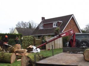 Удаление нежелательных деревьев на участке или как удалить ненужные деревья?