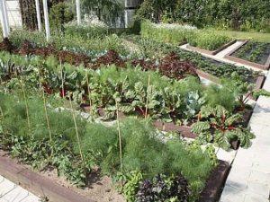 Правильный севооборот - урожайный огород