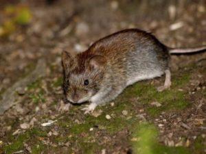 Прочный заслон мышам
