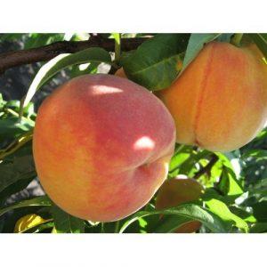 Какие сорта персика лучше всего выращиват