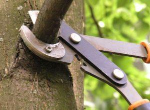 Восстановление подмерзших деревьев
