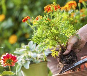 Удобрение для цветов в домашних условиях