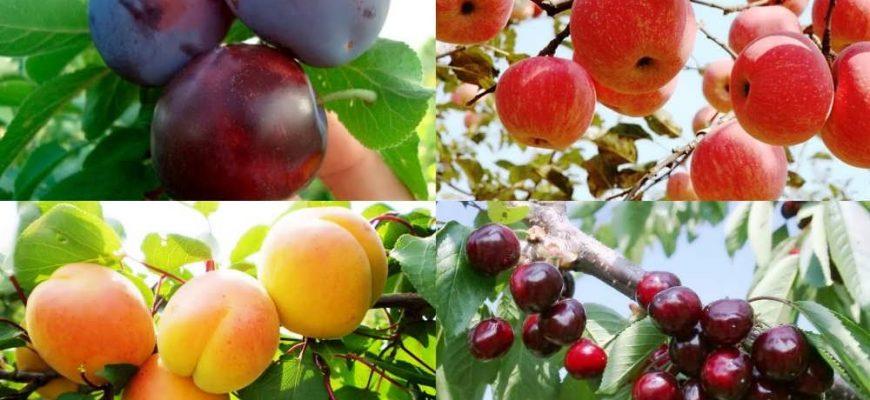 Краткая характеристика основных видов плодовых деревьев