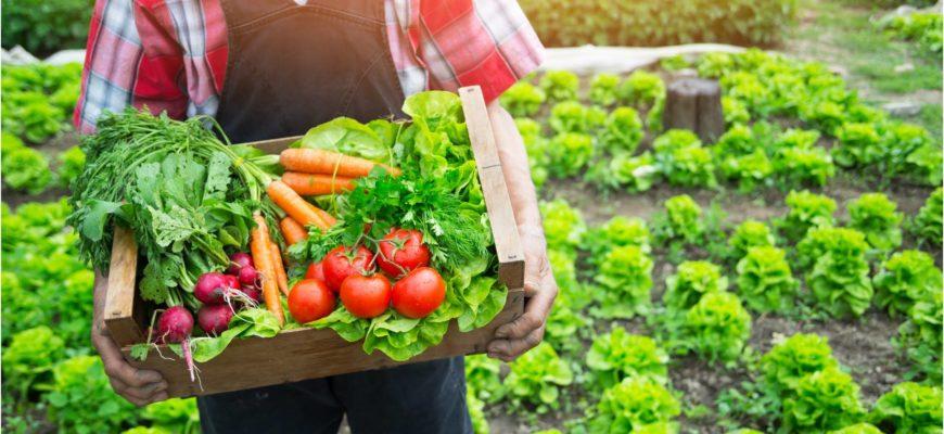 Выращивание овощей в огороде