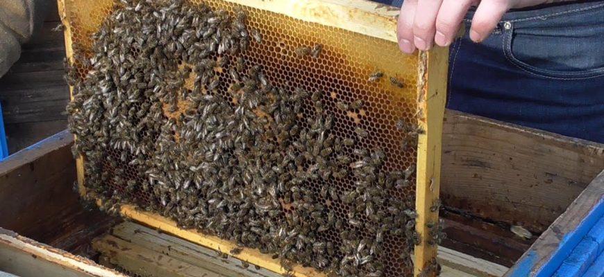 Устраняем недостатки после беглого осмотра пчел