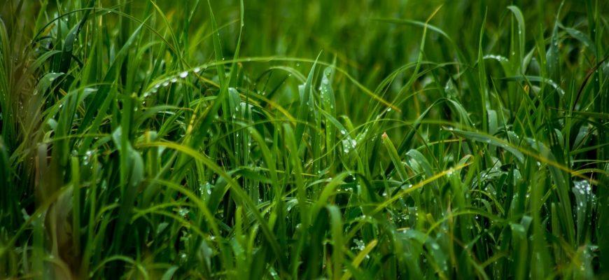 Урожай увеличит... трава!