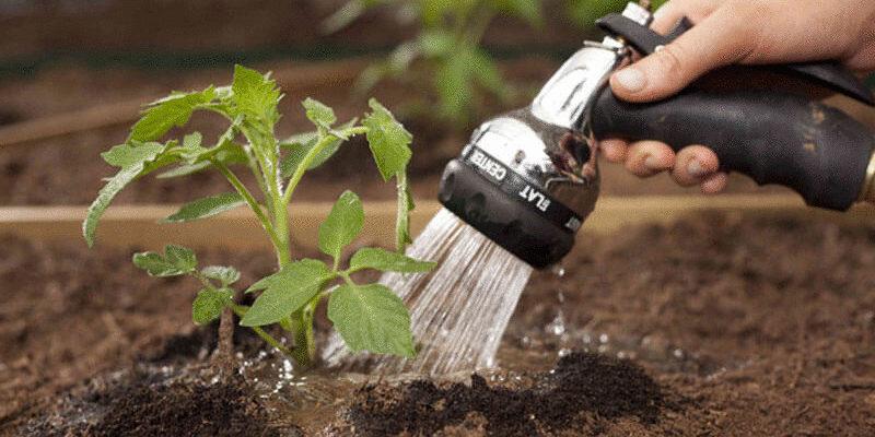 Рекомендации агронома по выращивании огурца в теплице