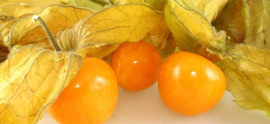 Особенности овощного физалиса