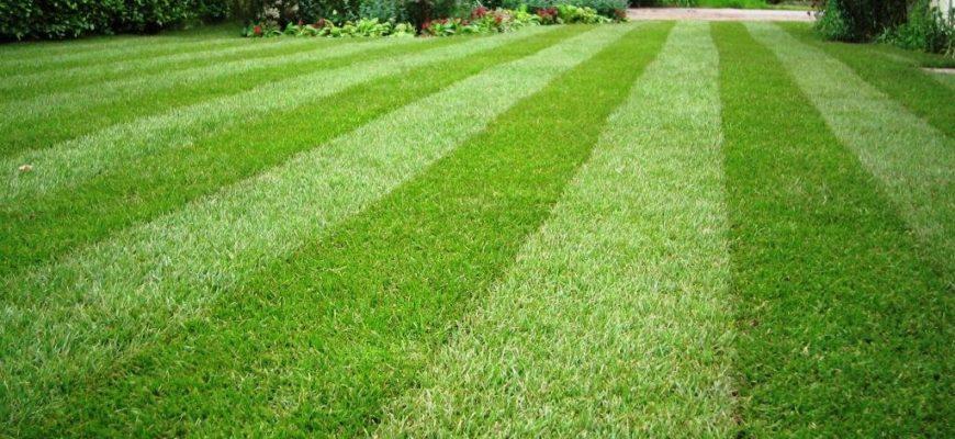 Газон на даче — виды газонов
