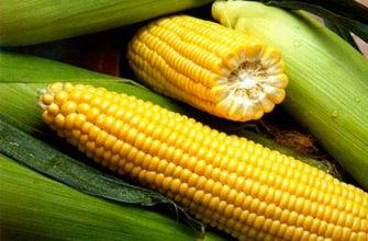 Кукуруза сахарная - вкусное лакомство