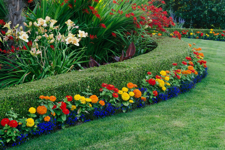 как красиво посадить цветы на клумбе фото вот ломануть