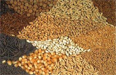 Какие семена купить?