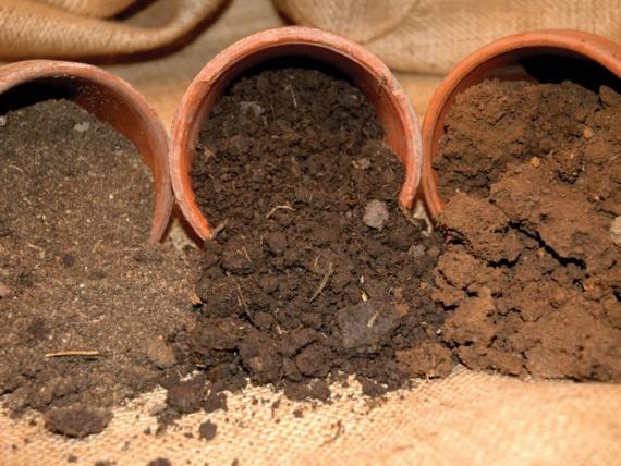 С заботой о растениях. Бедная почва - невкусные плоды
