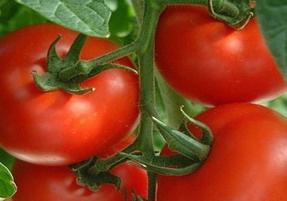Красные маринованные помидоры