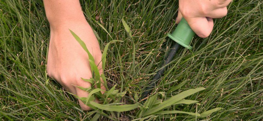 Не дайте сорнякам зазеленеть