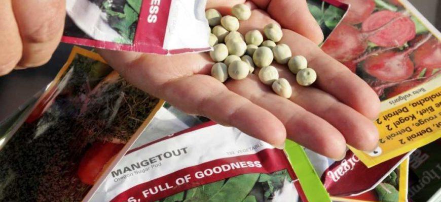 Какие семена купить