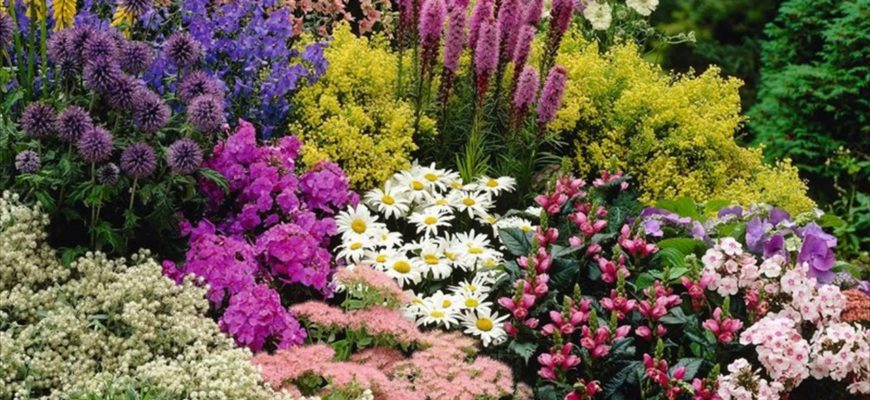 Многолетние цветы на даче