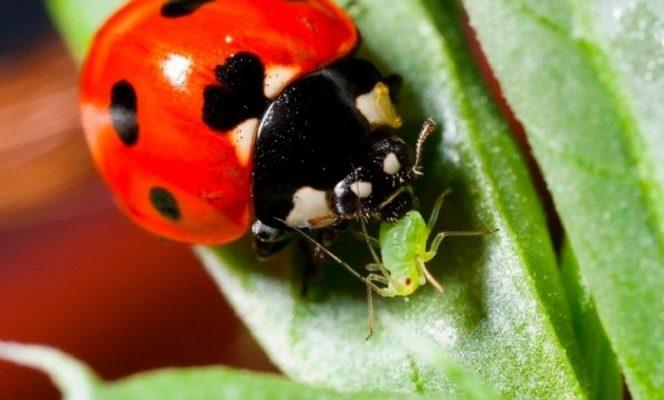 17 полезных насекомых для сада