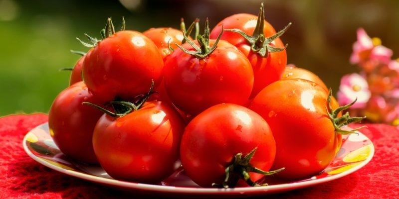 3 сорта Помидор устойчивых к фитофторе и урожайностью до 20 кг