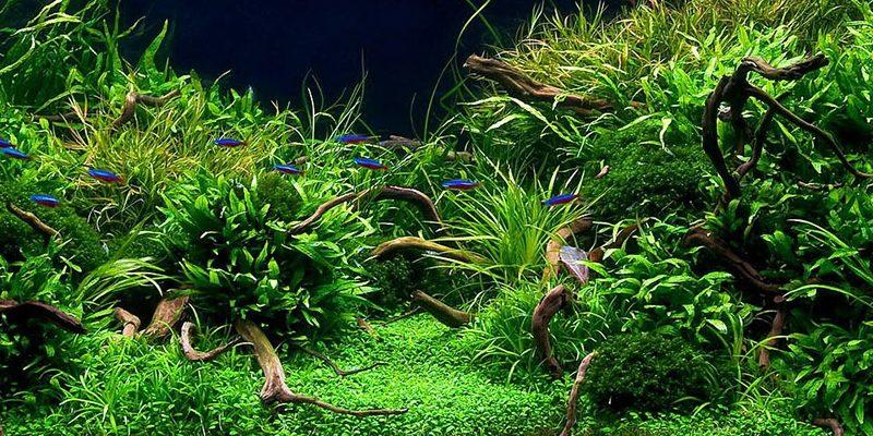 Аквариумные растения: фото с названиями и описанием, особенности ухода