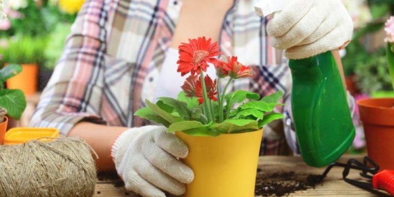 Аспирин настоящая находка для цветов в сложный период. Как его применять