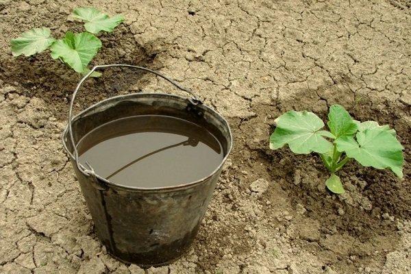 Чем и когда подкармливать тыкву для хорошего урожая?