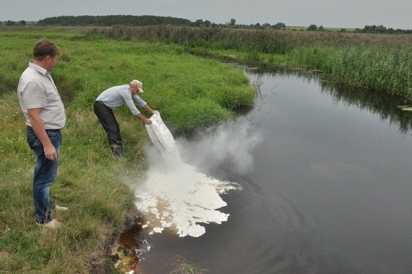 Чем можно удобрять пруд и как правильно это делать?
