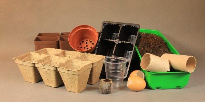 Делюсь своим опытом: Лучшие емкости для выращивания рассады