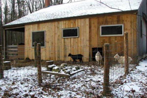 Инструкция: сарай для коз своими руками