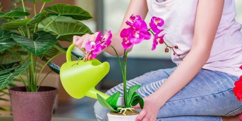 Как часто и каким образом лучше всего поливать орхидею