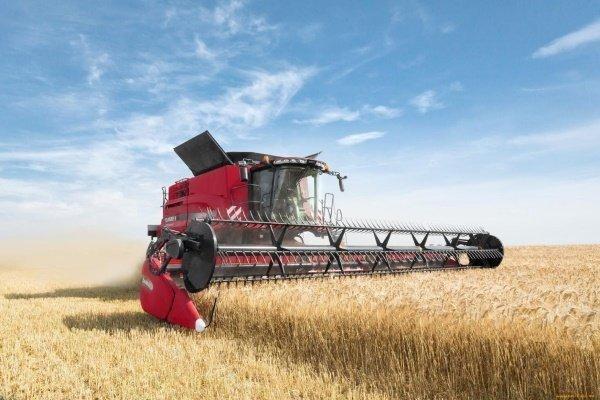 Как и когда производить уборку урожая озимой пшеницы?