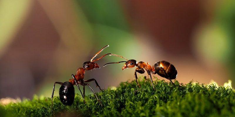 Как избавиться от муравьёв в квартире: только проверенные способы