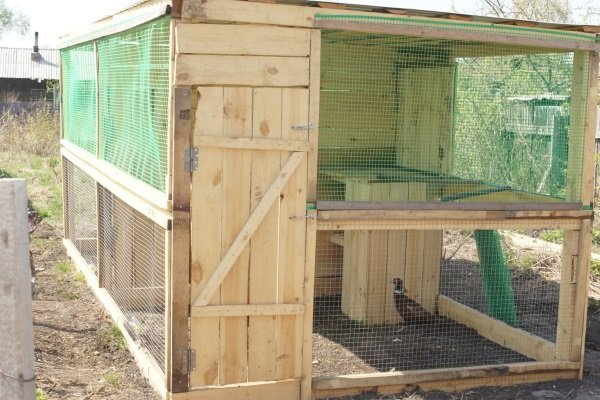 Как построить вольер для фазанов самостоятельно? Пошаговые инструкции и рекомендации