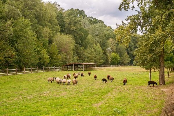 Как построить загон для овец: особенности конструкции и возведения