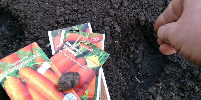 Как правильно посадить морковь весной в открытый грунт