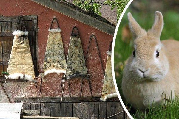 Как правильно выделывать шкуру кролика в домашних условиях?