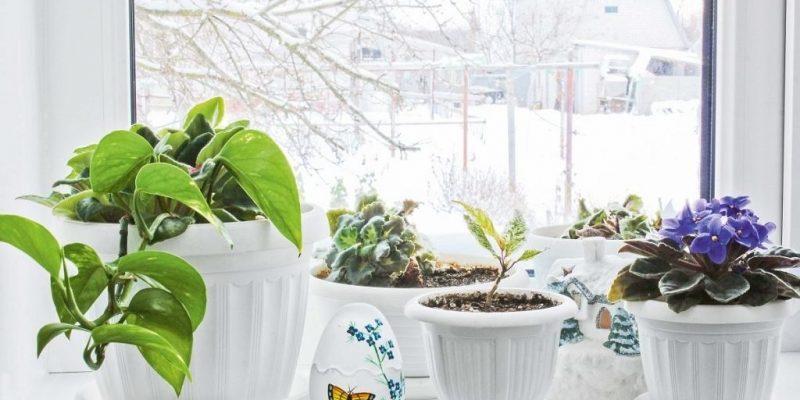 Как выращивать комнатные растения зимой