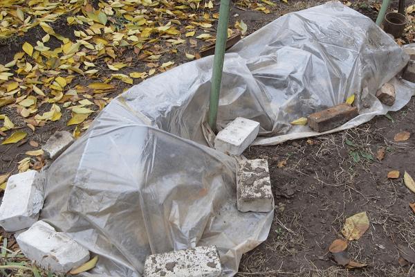 Какие есть способы укрытия винограда на зиму?
