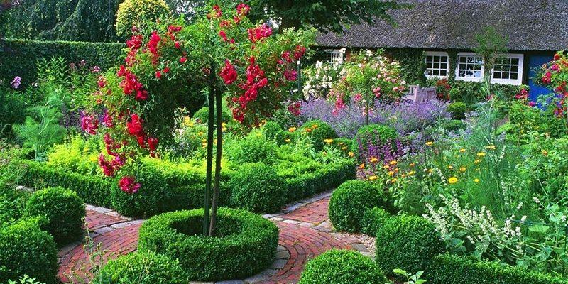 Какие кустарники бывают: уход и разновидности