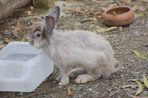 Какую поилку сделать для кроликов самостоятельно?
