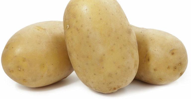 Картофель Вега – характеристика сорта, отзывы, вкусовые качества, фото