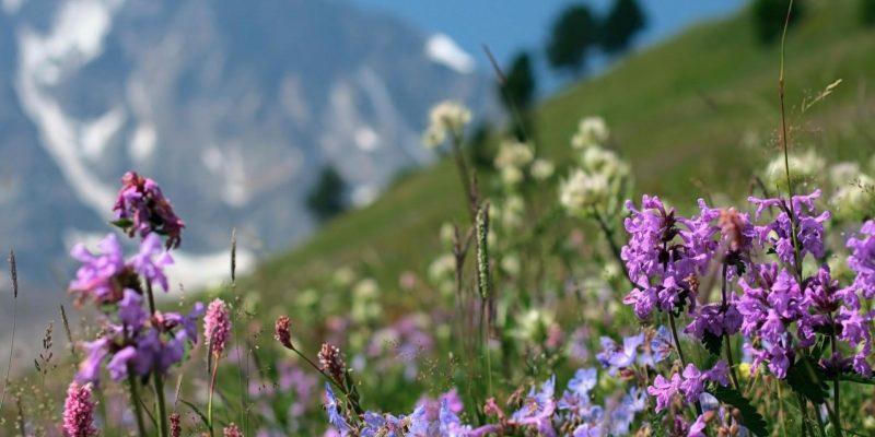 Кавказские травы все лечебные и целебные от долгожителя