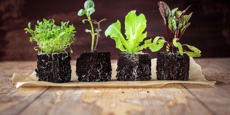 Когда сеять рассаду в 2021 году: календарь когда и что садить