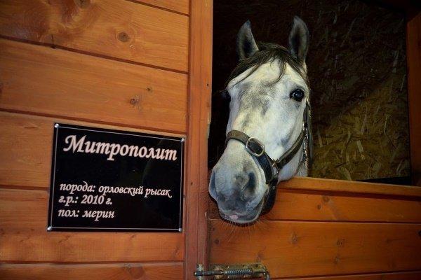 Красивые клички для лошадей: как лучше всего назвать коня?