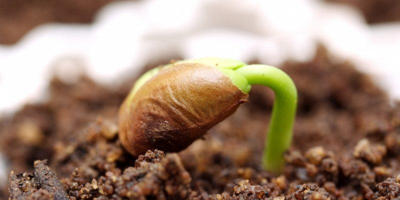 Лучшие методы от которых даже старые и плохо всходящие семена прорастут