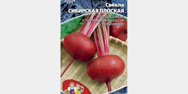 Лучшие сорта свеклы для выращивания и хранения в Сибири